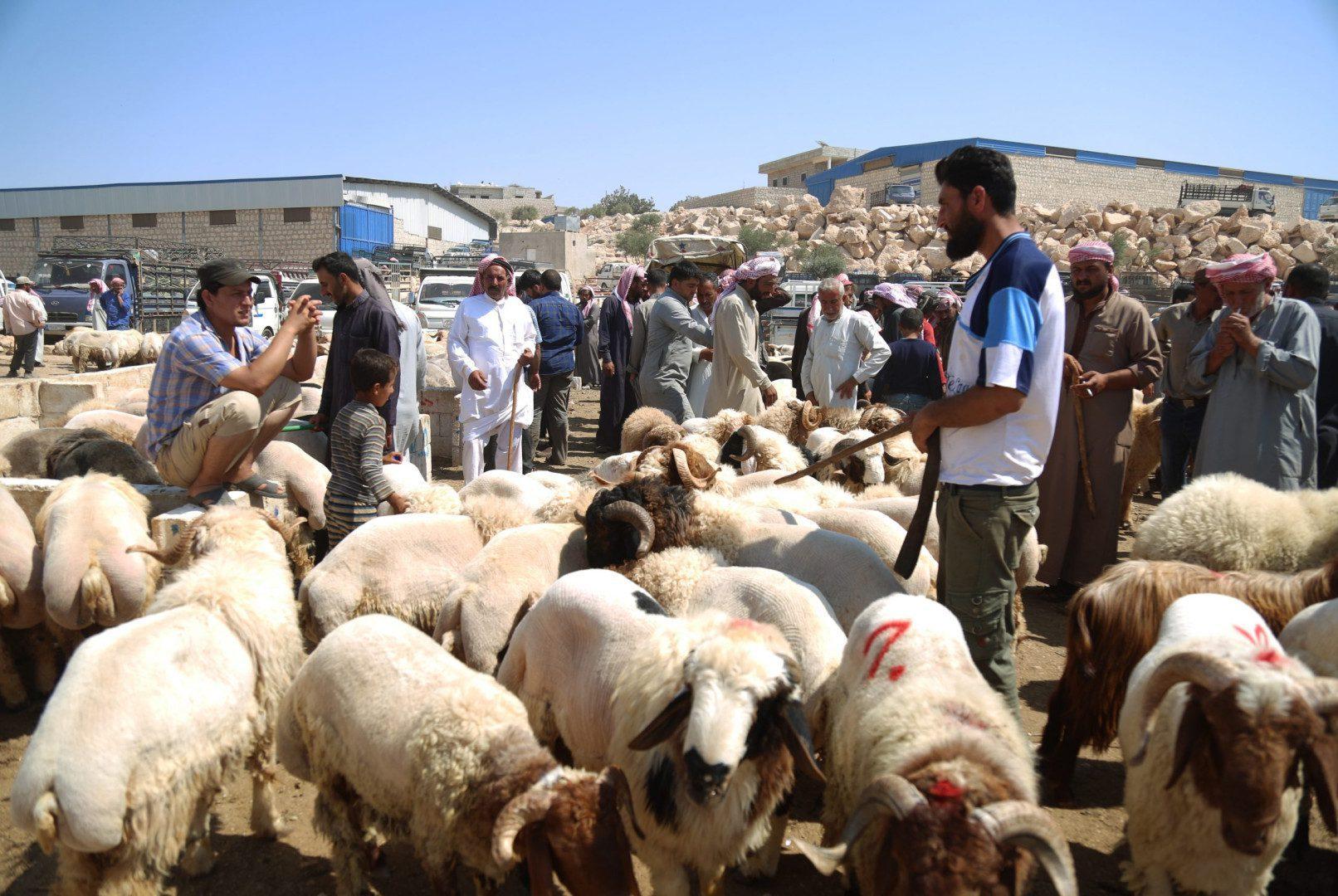 مواطنون يرتادون سوق البردقلي للمواشي غرب مدينة الدانا بريف إدلب الشمالي، 20/ 7/ 2021 (سوريا على طول/علي حاج سليمان)