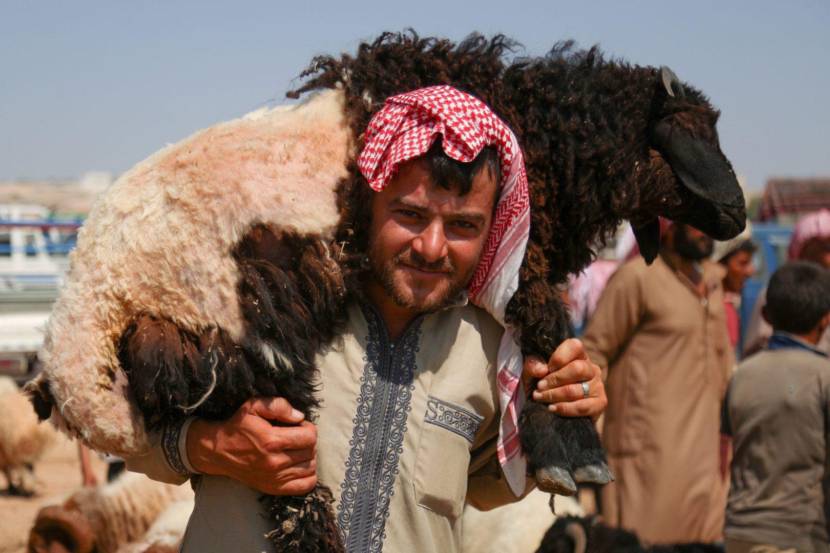 رجل يحمل خروفاً على كتفيه في سوق البردقلي للمواشي غرب مدينة الدانا بريف إدلب الشمالي، 20/ 7/ 2021، (سوريا على طول/علي حاج سليمان)
